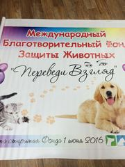 Подарки от Международного Благотворительного Фонда Защиты Животных