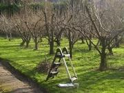Обрезка  плодовых деревьев.Посадка саженцев.