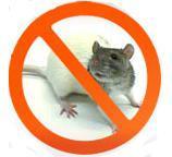Крысы ,  мыши Эффективные средства для уничтожения грызунов.